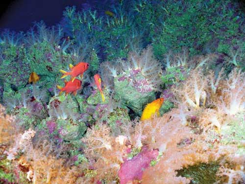 The Aquarium, East Diamante submarine volcano, NOAA